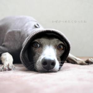 「お知らせ」9月8日より「犬服&犬寝袋」の発送予定日が変わります