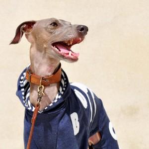 41日にかかって遂に完成「犬服」My dog silhouette. The dog's name is...「世界に1つだけの洋服」|ロンパース(ボーダー裏地付き)×選べる3カラー