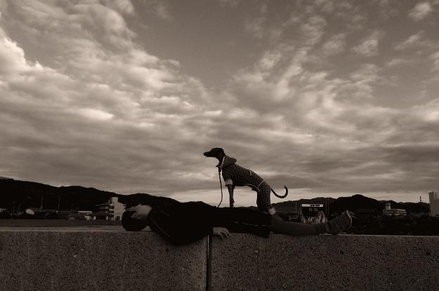 夕暮れの淡路島を歩く。漁港にカモメが飛び、愛犬と過す時間。