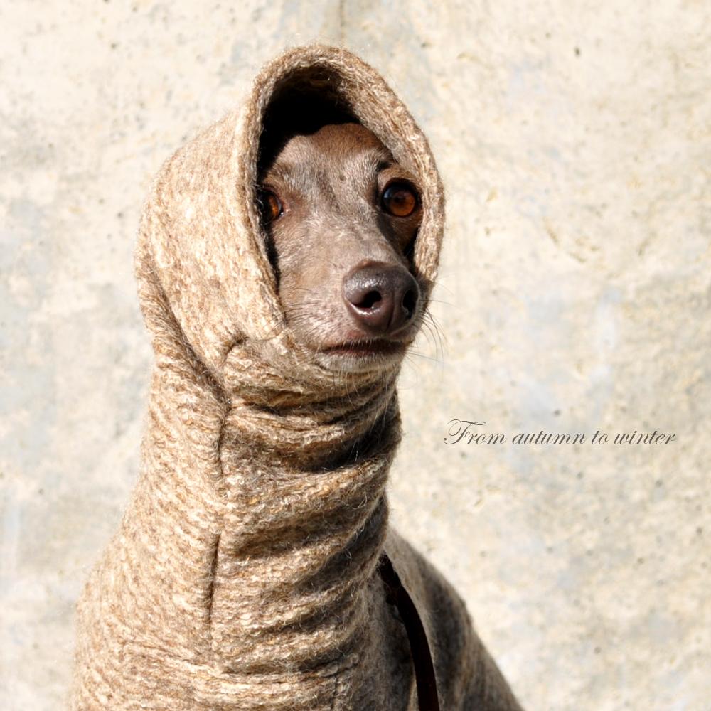 「新色デビュー」犬服|エレガントなイタリア製ニットジャガード「繊細な感性をくすぐる、エルブ」