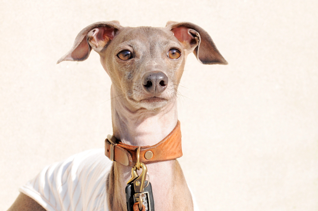 「愛犬の顔が穏やか♪♪」いつもはこんな表情です。