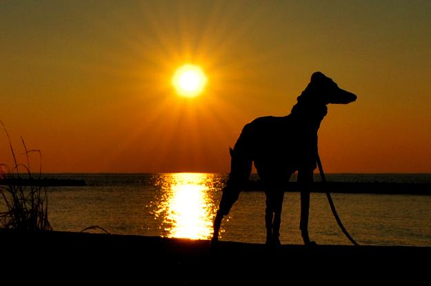 淡路島の夕焼け空の下を散歩すると