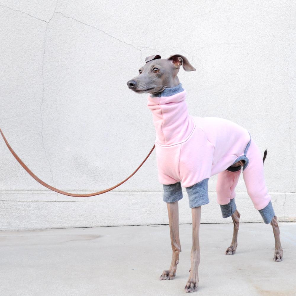 「モデル撮影テクニック」犬服の撮影は「愛犬」の表情に目がいく「壁」を見つけることから始まる。