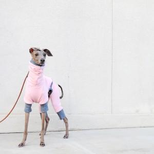 「犬服」を表現するに適した壁は、「愛犬」の表情に目がいく壁。