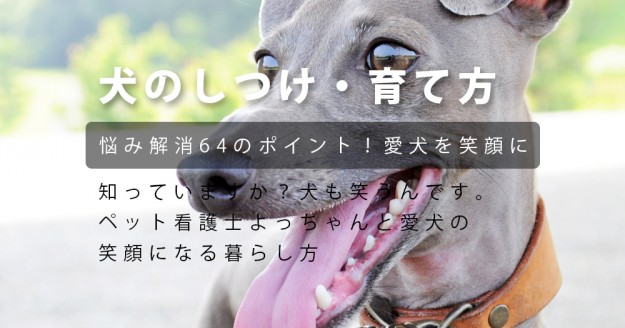 犬のしつけ・犬の育て方|ペット看護士よっちゃんと愛犬の「笑顔になる暮らし方」悩み解消64のポイント!