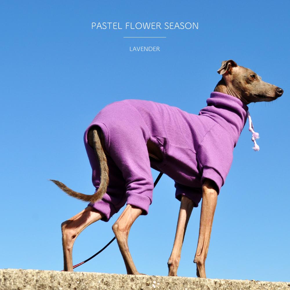 花の香りをまといたい「新作の犬服」PASTEL FLOWER SEASONはお花の色をモチーフにした、とってもシンプルなお洋服