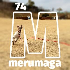 【ARATA HOUSEメルマガ Vol.74】イタグレBuono!と行く「淡路島」冬の散歩|2016/2/1発行