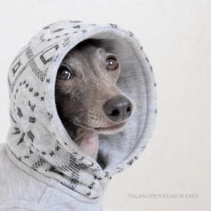 「ミニピン イタグレの服 Happy-Go-Lucky」にBuono!の写真が載ってることが嬉しい話