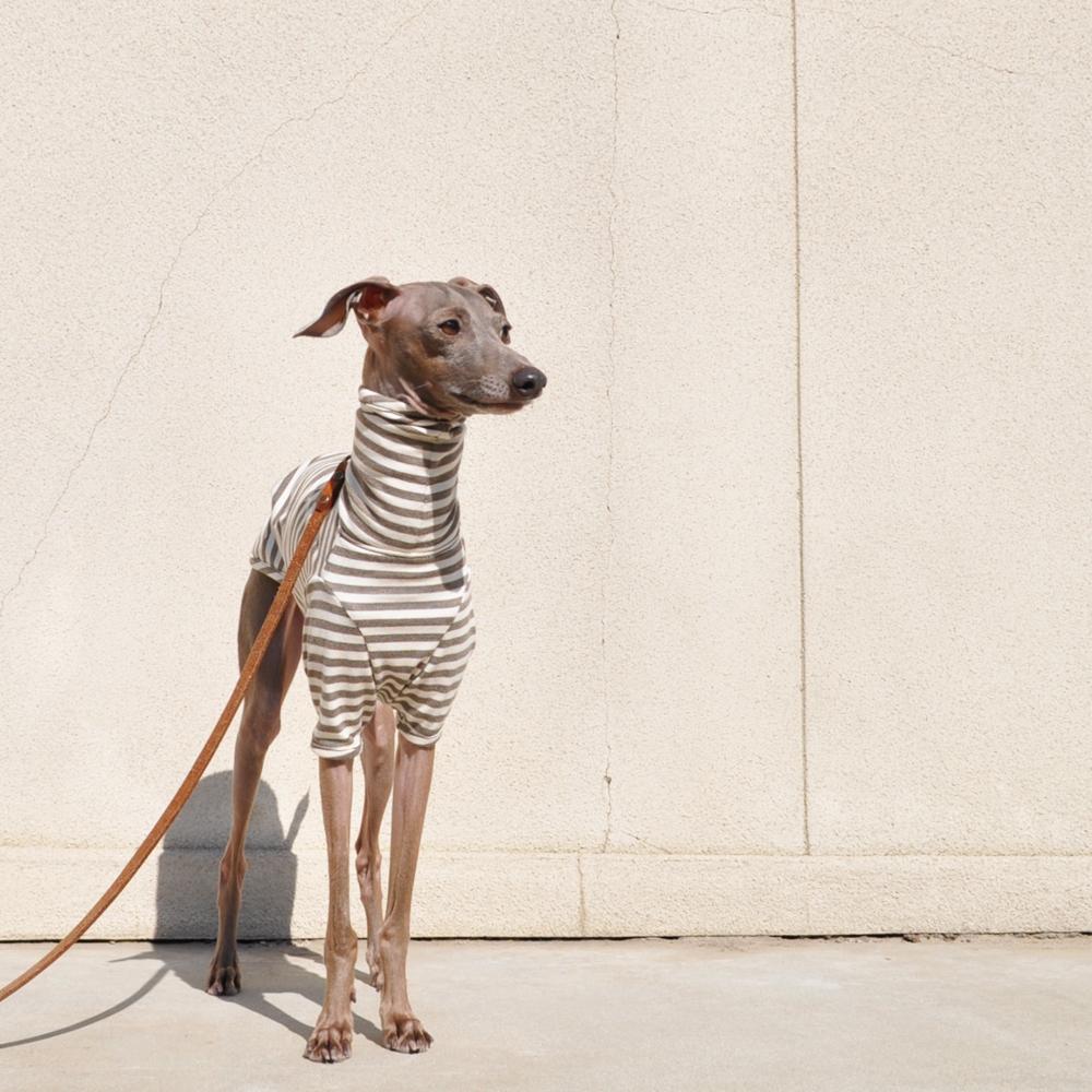 定番のボーダーニットに「2016.新色登場」皆さんの愛犬は何色がお好み?5カラーから選べるお洋服