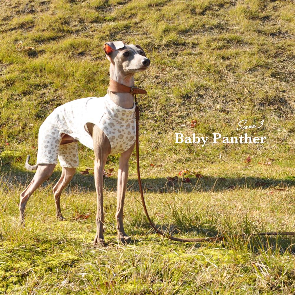 「新作犬服」Baby Panther(豹柄)|春先のちょっと寒い時、芝で遊ぶ時にちょうどいいお洋服|オフショットも公開中