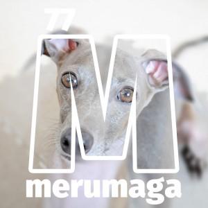 【ARATA HOUSEメルマガ Vol.77】Buono!のオーダーメイドのオモチャ新旧対決|2016/2/29発行