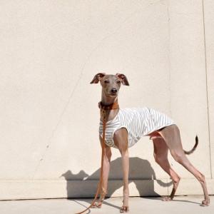 ARATA HOUSEの犬服は「ショート」「ハーフ」「スタンダード」「ロンパース」の4タイプから選べます