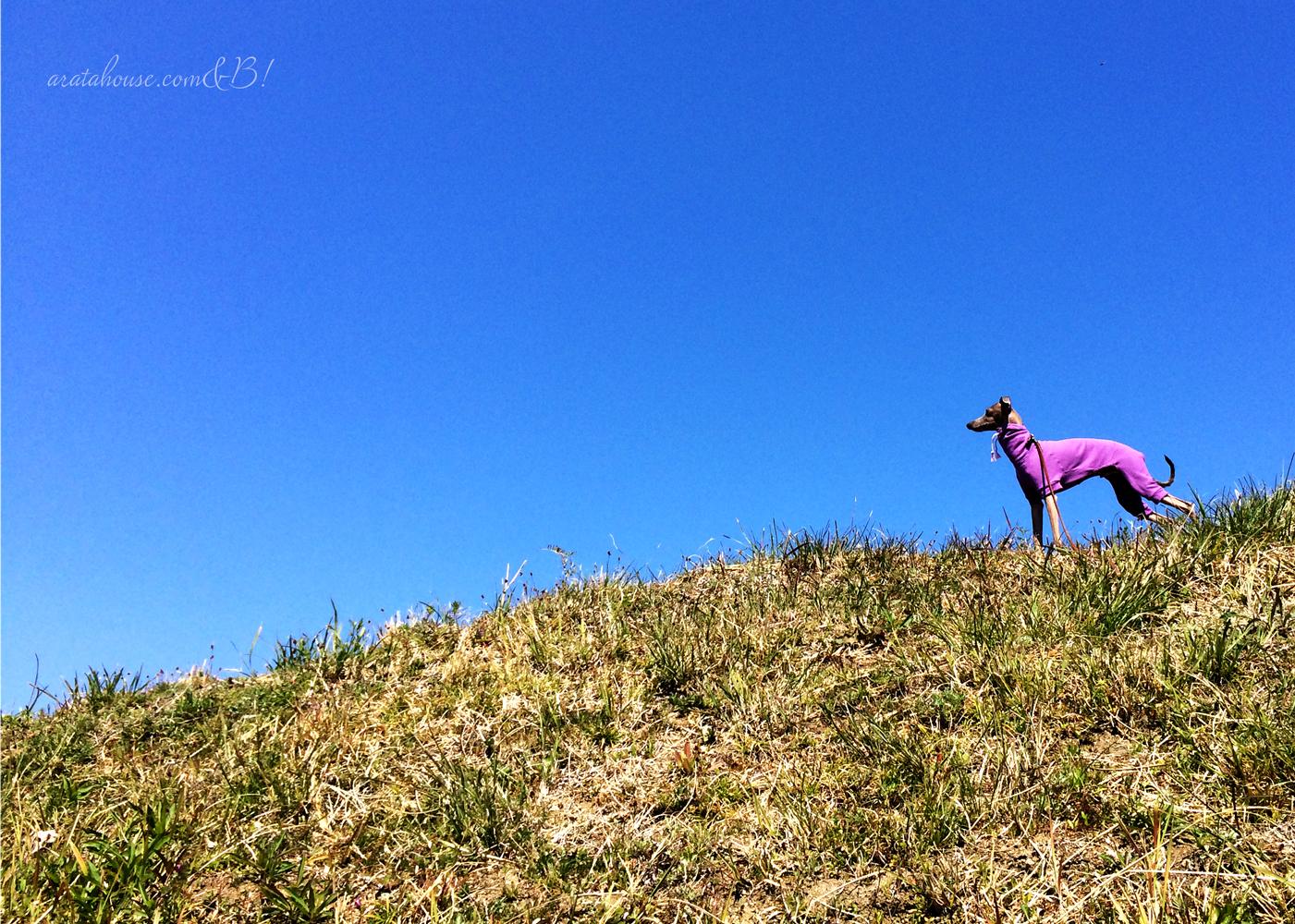 「淡路島の春の散歩」海辺や玉ねぎ畑をのんびり歩きながら愛犬を撮影したり。春は「花さじき」「淡路夢舞台」も気持ちがいいよ。