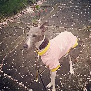 春うららピンクのお洋服と桜と共にイタグレ海☆「Instagramギャラリー Story009」