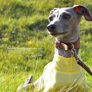 新作犬服「愛犬を紫外線から守ろう」紫外線が増える時期は5月から9月です|UVカット加工シルケット天竺ニット