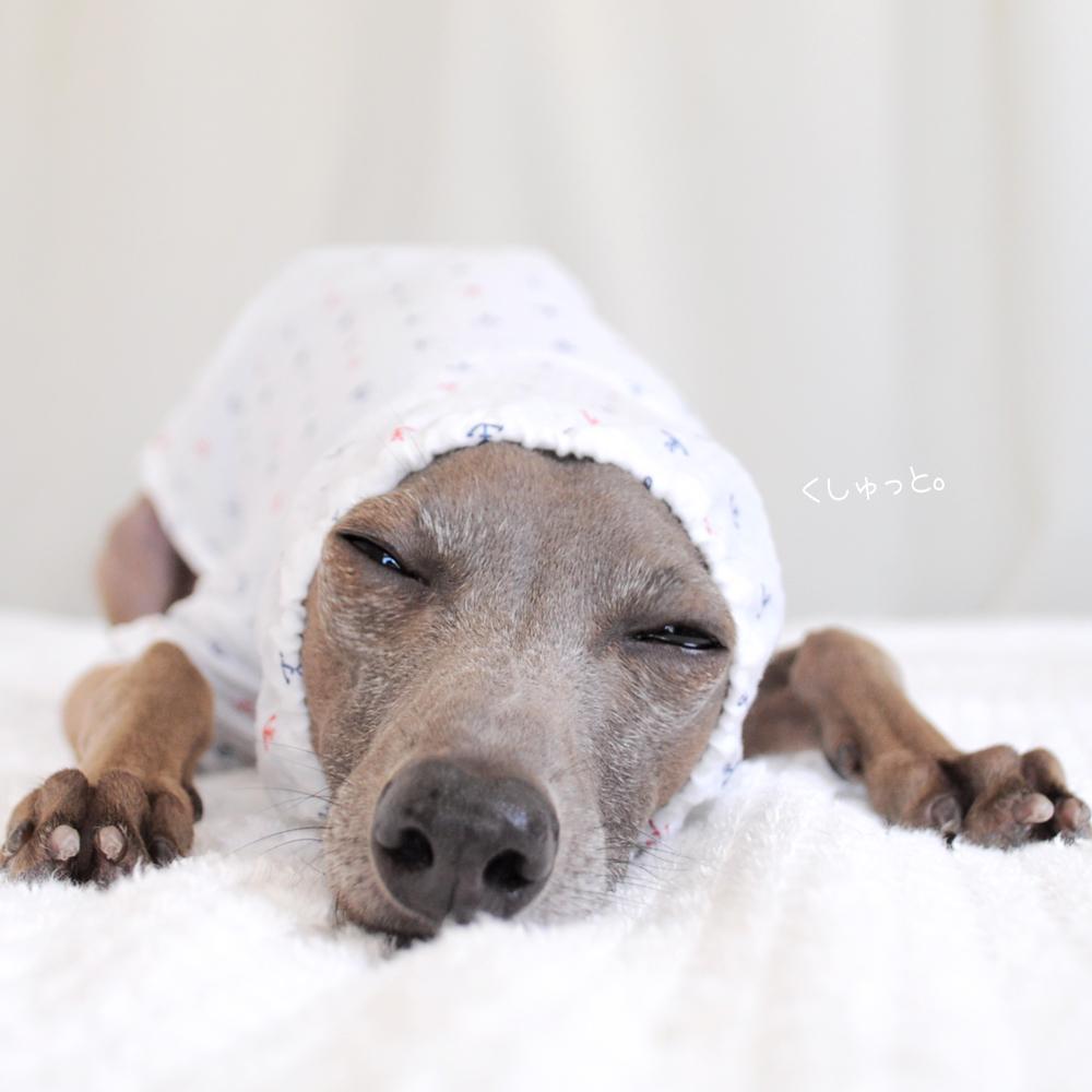 犬服|くしゅっと。かわいいアンカー|リップルプリント|選べる3タイプ×2カラー(ホワイト/ネイビー)