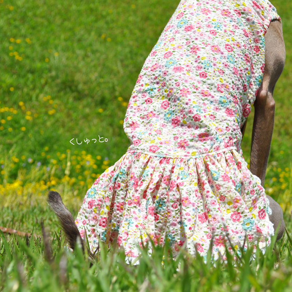 犬服|くしゅっと。かわいいお花|リップルプリント|選べる3タイプ