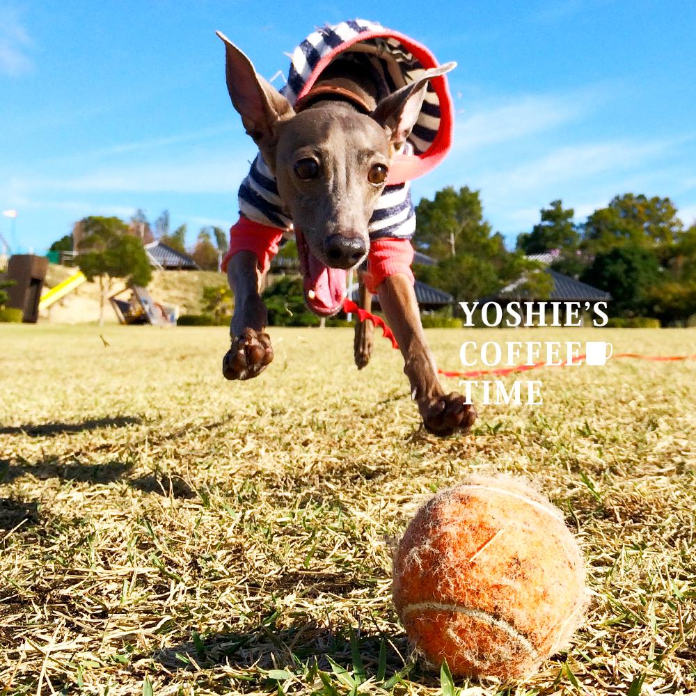 私の大失態から生まれた夫婦の約束事(愛犬編)-YOSHIE'S-COFFEE-TIME