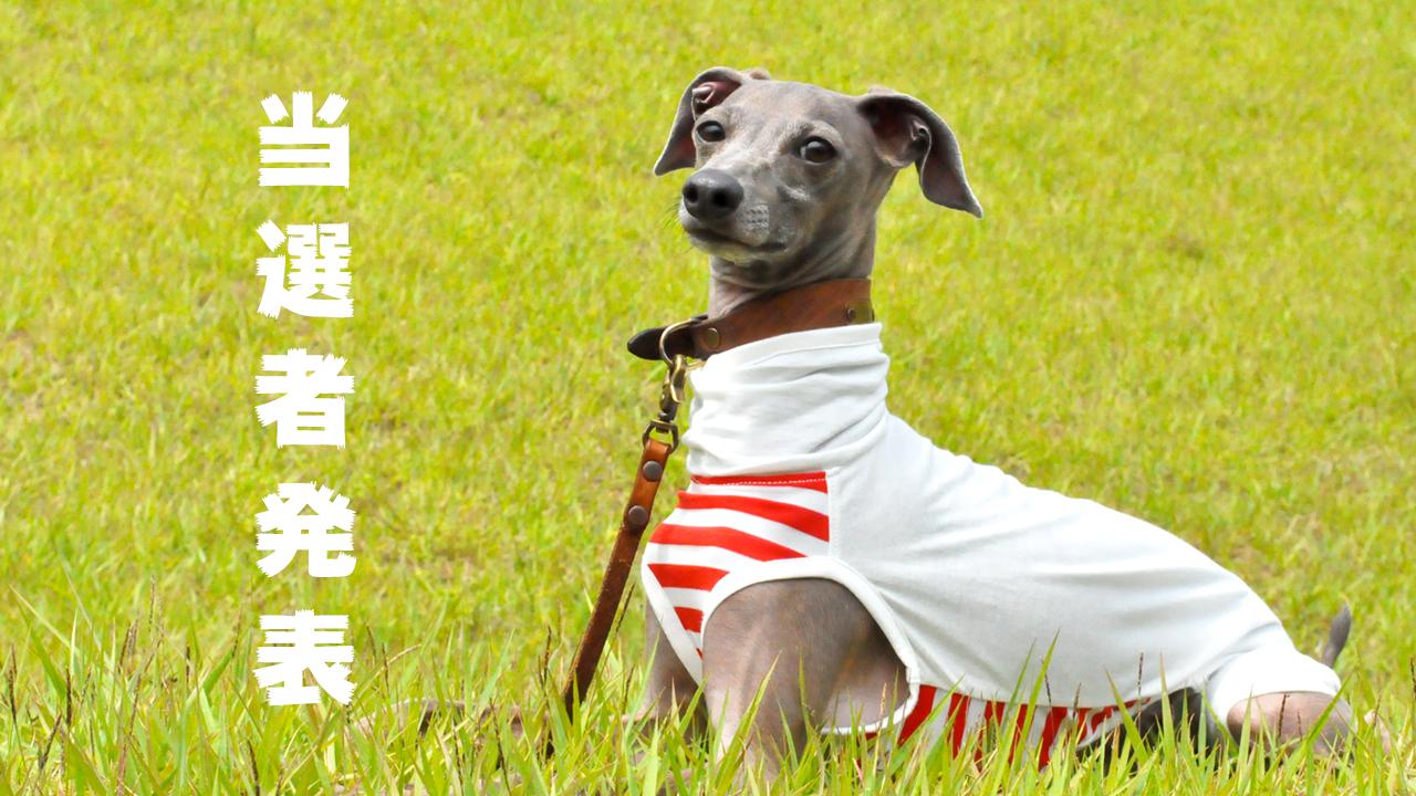 当選者発表「おっちょこちょいな♡よっちゃんが勘違いして作った!愛犬を蚊から守ろう「フィラリア予防服」feat. イタグレBuono!の香りと少しの毛♡プレゼント」