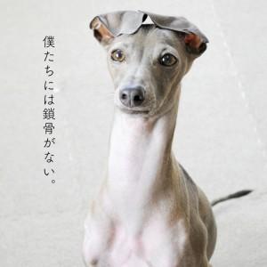 犬には鎖骨がない!そこから見えてくる今の時代にあった犬との暮らし方【犬の飼い主が知ってそうで、知らない大切なこと vol.1】