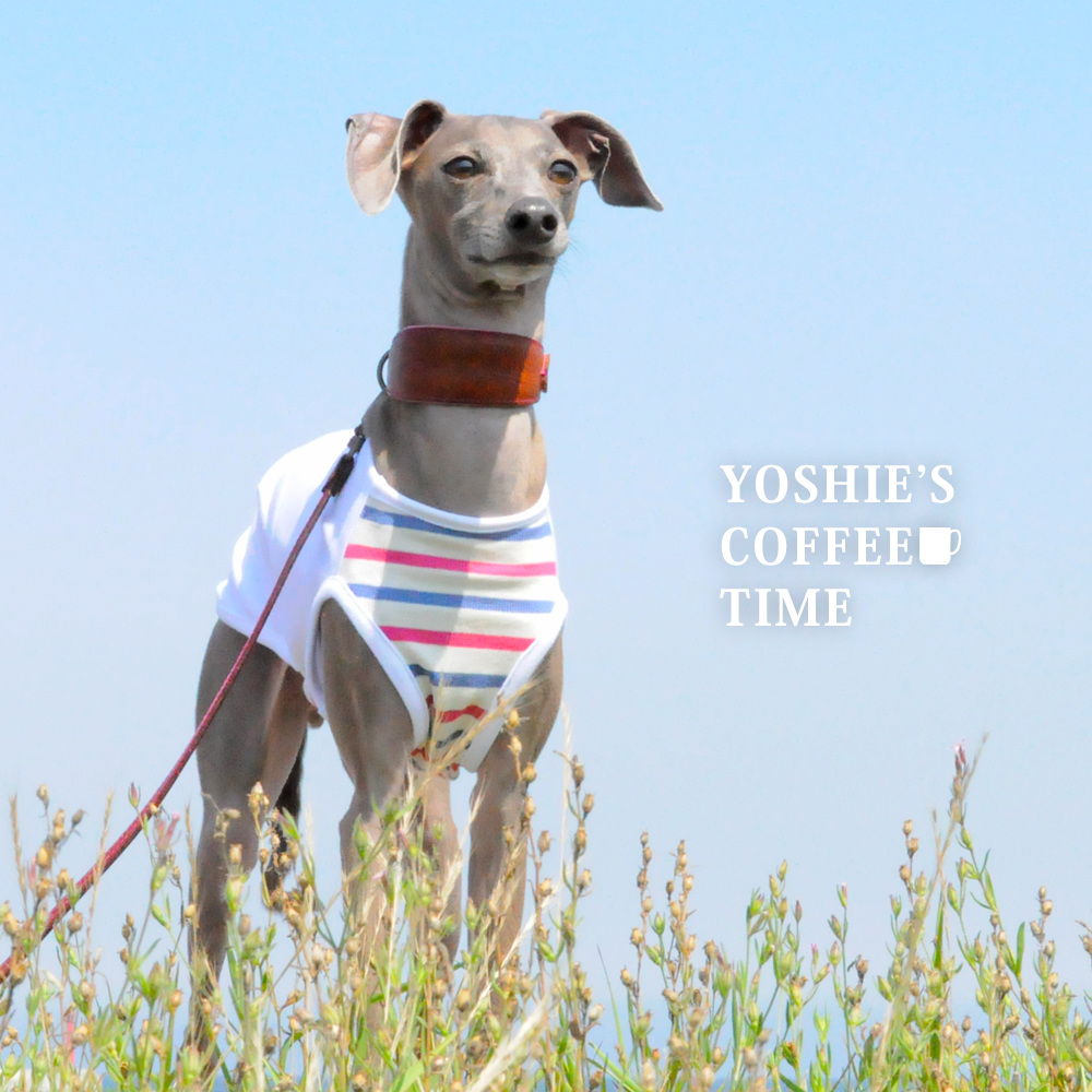 YOSHIE'S-COFFEE-TIME-新作「イタグレ服」販売開始しません😅