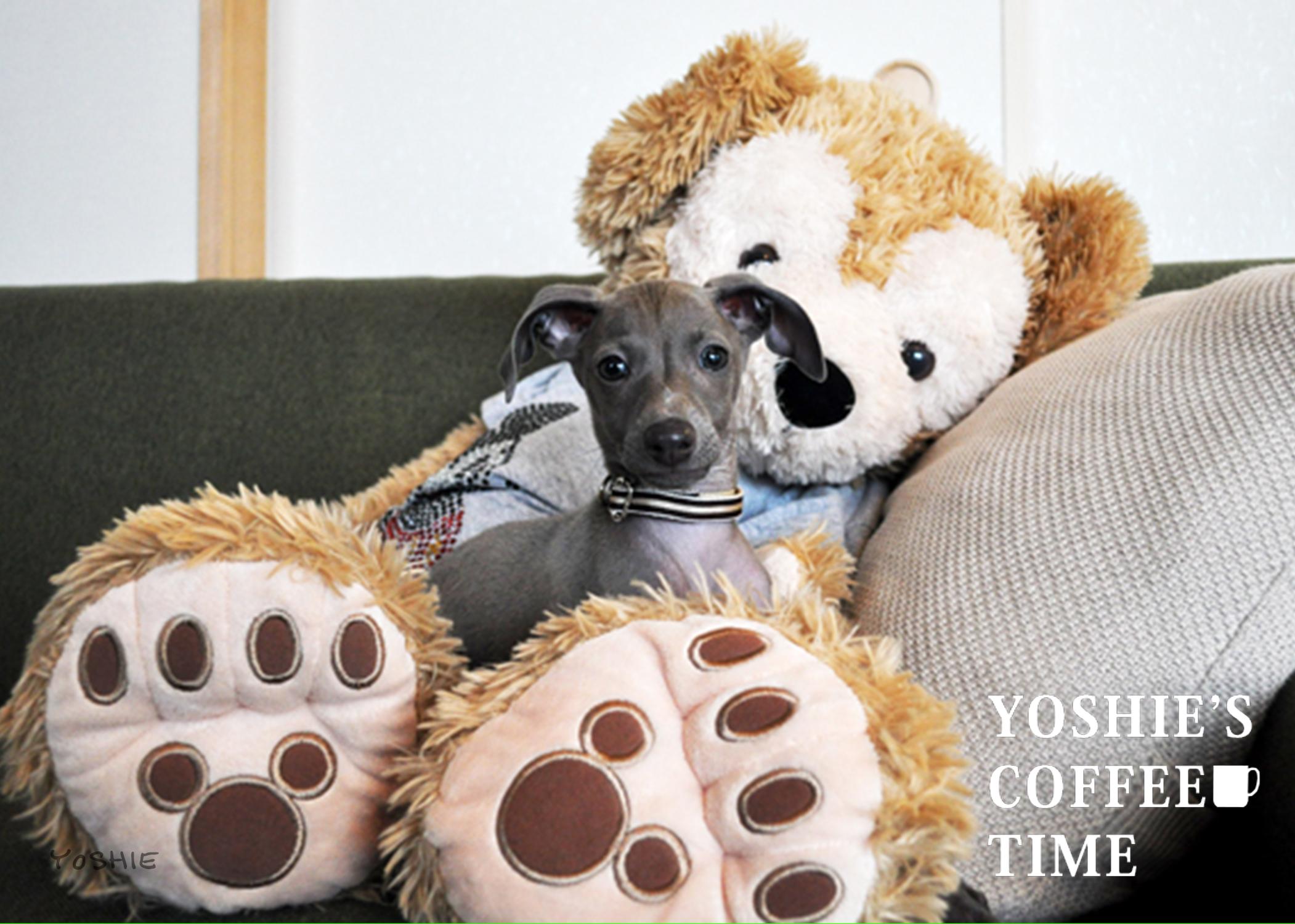 ボク(イタグレBuono!)とダッフィーは幼なじみ「生後2ヶ月頃の写真つき」-YOSHIE'S COFFEE TIME