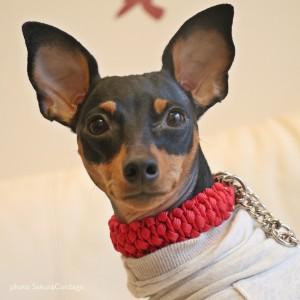 「素敵な犬の首輪」パラコードで暮らしに彩りを。首輪とリードを通してお散歩中にワンコの手をつないでいるということ。「SakuraCordage」