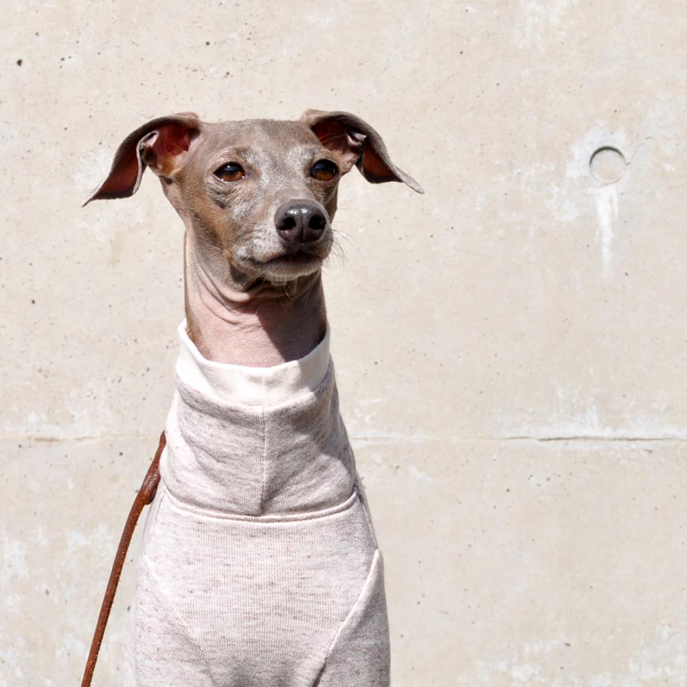 「新作犬服」シンプルで可愛らしい「ミラノリブ」のお洋服|ミラノに魅せられて