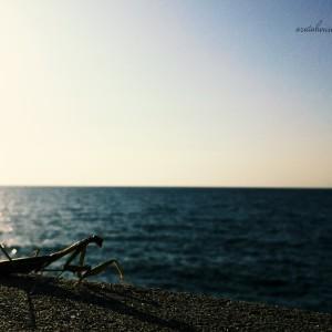 蟷螂と防波堤