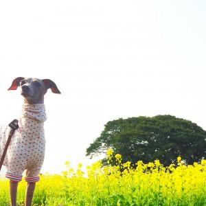 Buono!も菜の花クンクン。