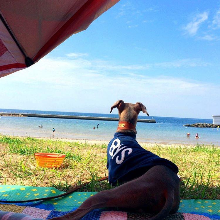 淡路島の海を見ながら走る。