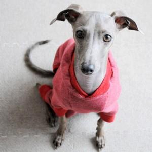 「犬服メンテナンス」秋冬のお洋服のメンテナンス(お直し)をしています。