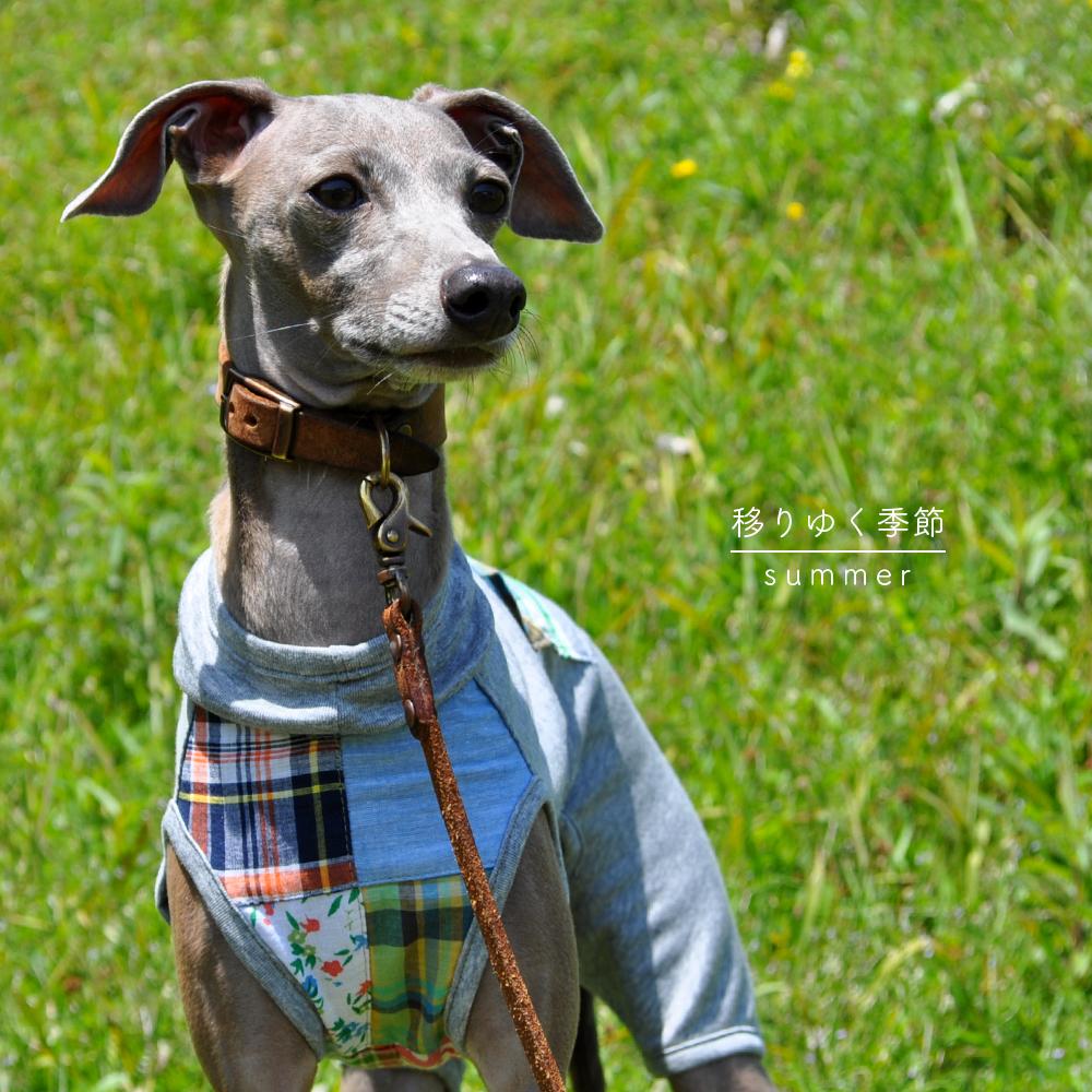 犬服 移りゆく季節 -summer- パッチワークインド綿 × 接触冷感クールマーベラス 選べる4タイプ×1カラー