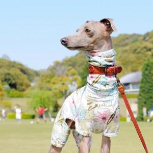 「犬服|Flower Garden|在庫追加/2017年5月30日pm21:00に追加します」Buono!も大好き、みんなも大好き可愛いお花のお洋服♪