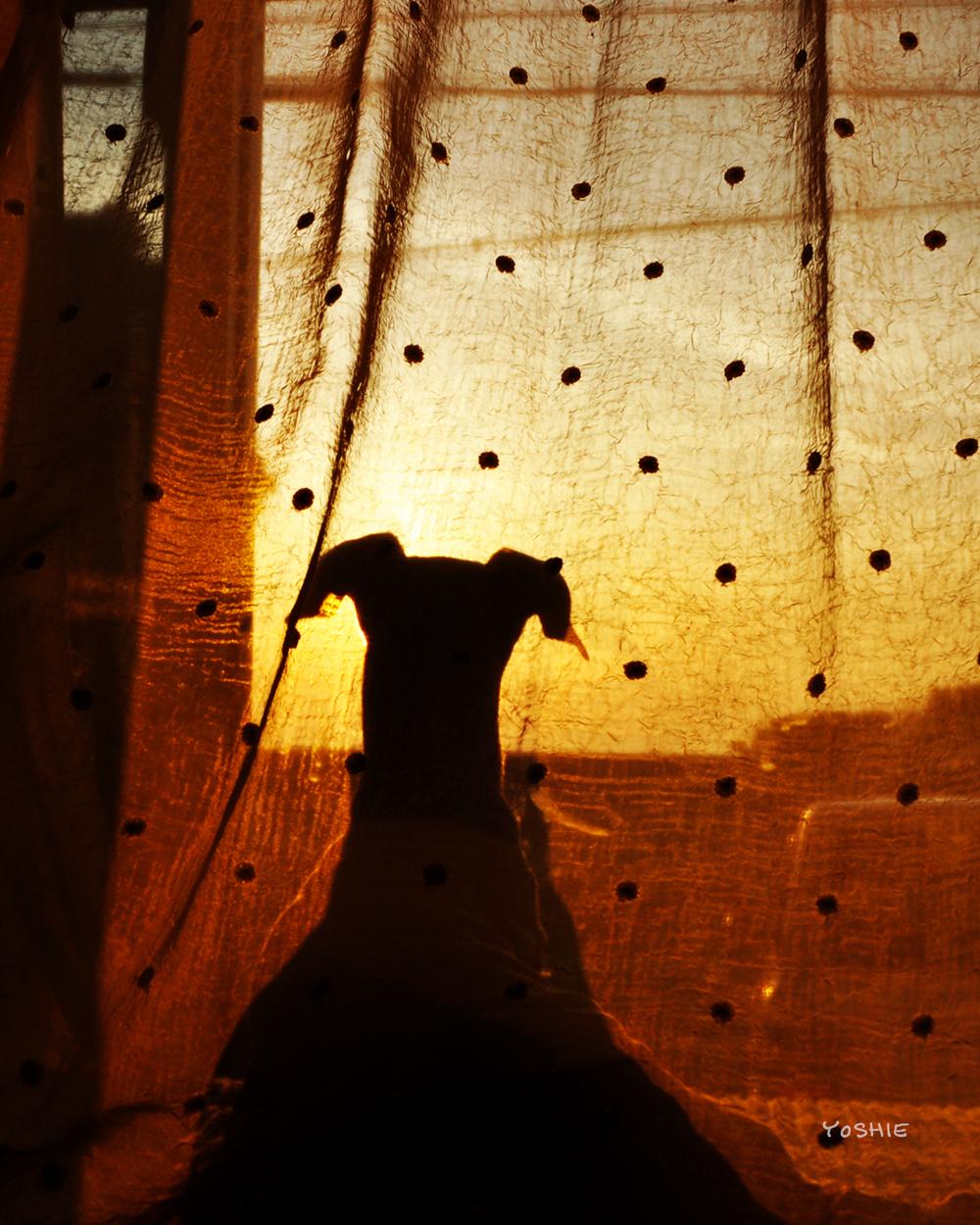 愛犬の見つめる先に、感動的な世界が広がる。
