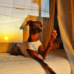 愛犬の見つめる先には、感動的な世界が広がる。