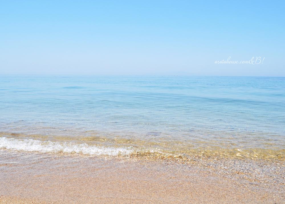 やっぱり海が好きだ!さぁ、海に行こう!「新作犬服|Eternal happiness Dolphin ring」