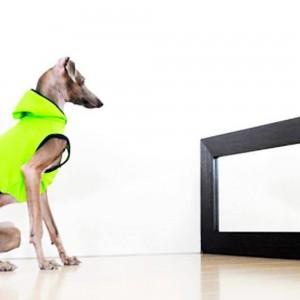 愛犬のお洋服選びが難しい。生地の柔らかさ、伸縮性、色合いがわからない?そんな時はよっちゃんがお手伝いします!