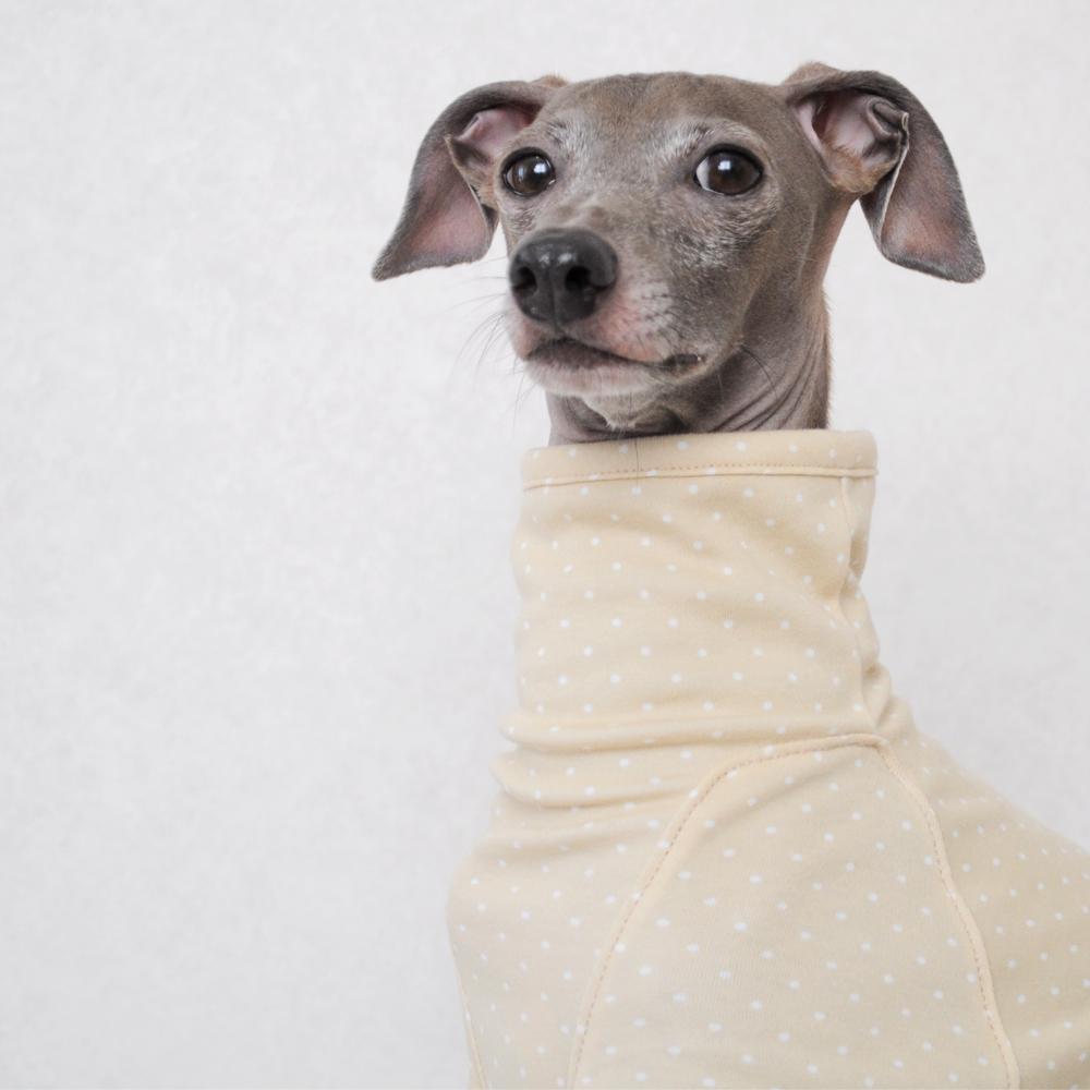 「犬服デザイン」首元の前後に縫い目がないタイプのネックについて「肌荒れ予防|掻き癖保護|防寒対策」