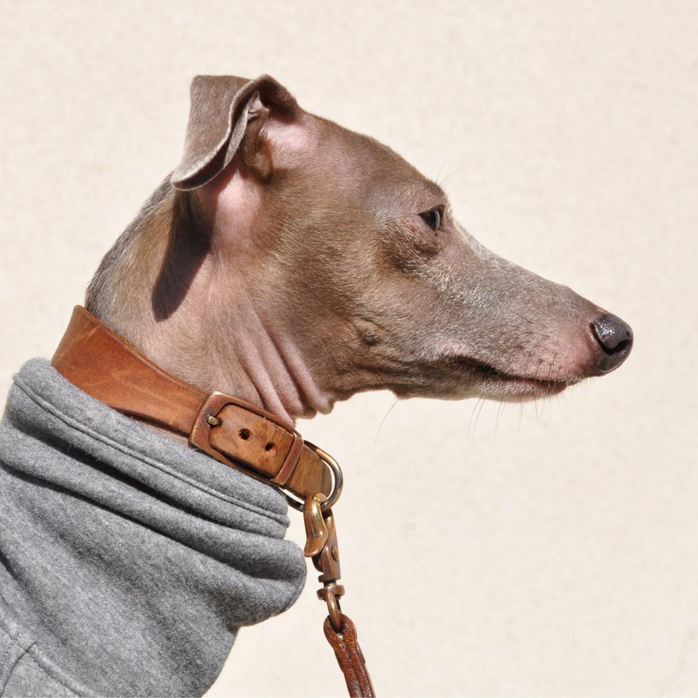 ありのままの犬服屋さんでありたい。|犬服|肌寒い日に温もりを。|裏起毛ボンバーヒートニット(保温)|選べる4タイプ