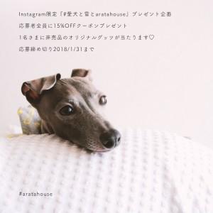 Instagram限定『愛犬と雪とaratahouse』プレゼント企画