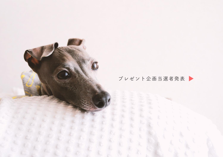 「当選者発表」Instagram限定『愛犬と雪とaratahouse』プレゼント企画