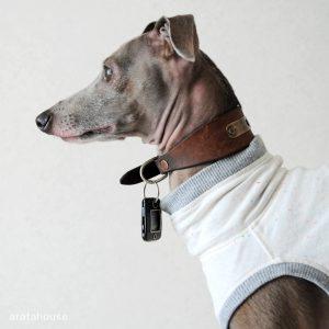 地震発生!!愛犬Buono!にしたこと。「ペットの災害対策」「災害時におけるペットの救護対策ガイドライン」