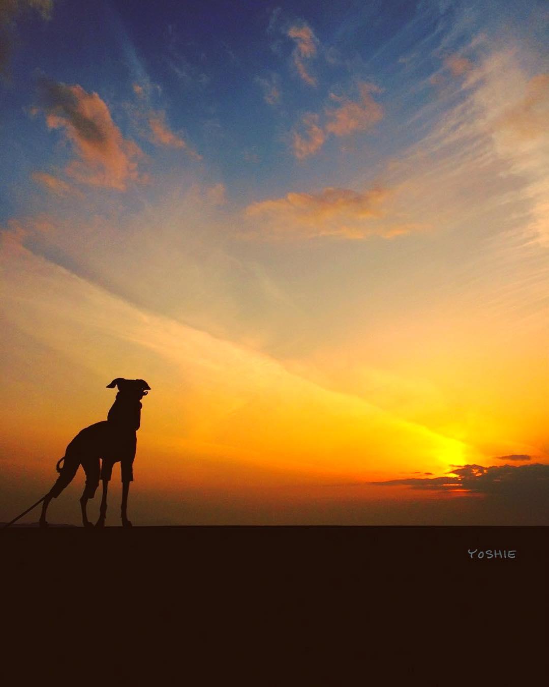夕日を見ながら。