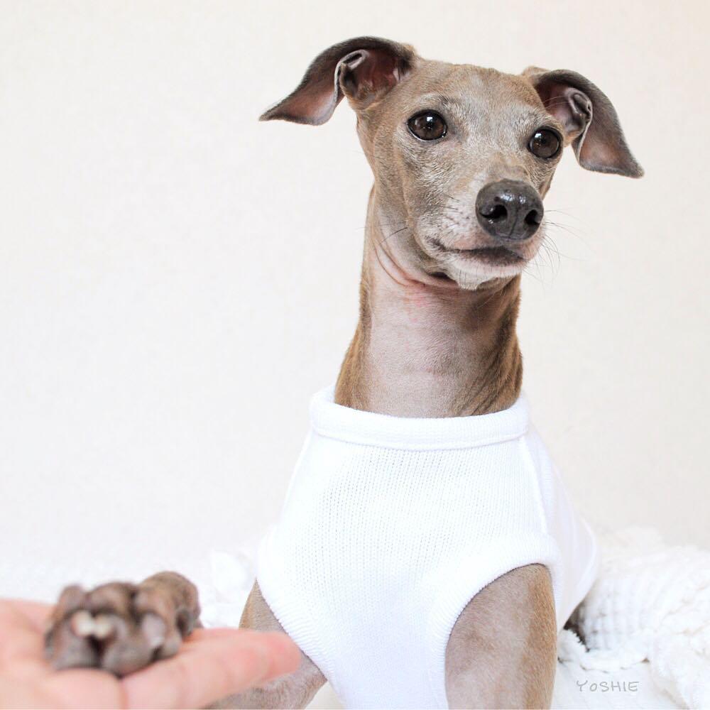 ARATA HOUSEが目指している新しい犬服屋さんの形を聞いてください。